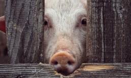 Fleischkonsum steht in der Kritik wegen seiner negativen Auswirkungen auf Umwelt und Gesunheit