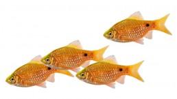 Fischschwarm: Kulturentwicklung - mit uns agil, werteorientiert, interdiszilinär und systemisch.