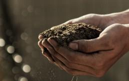 Kulturwandel in der Ernährung mit alternativer Landwirtschaft - naturnah und regional